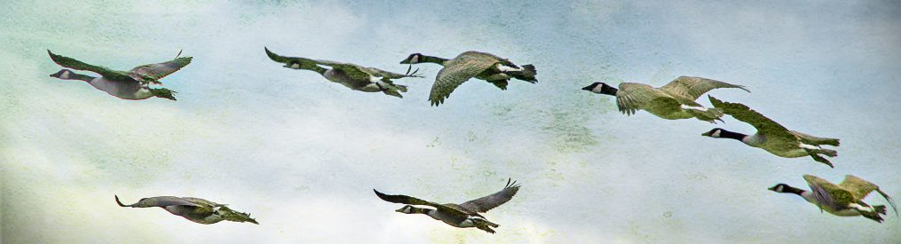 Wild Goose Poetry Review – Poetry Worth Reading